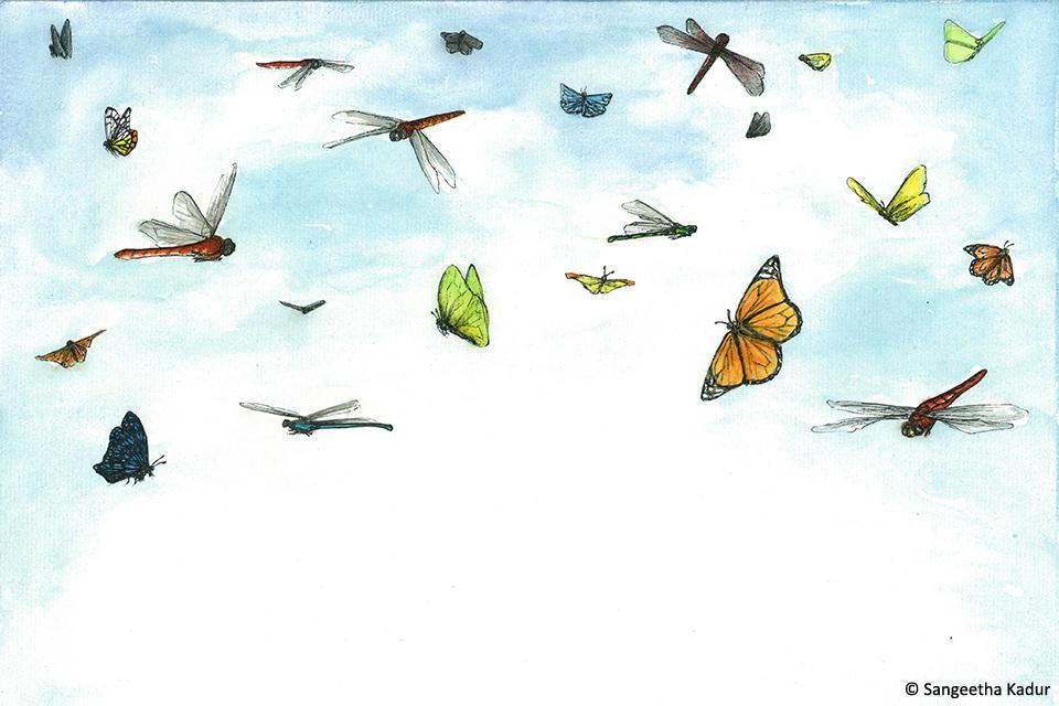 7_Butterflies