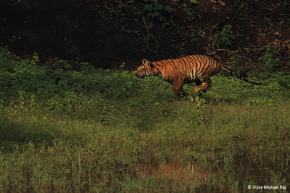 06 Tiger sprint1 cc resize_1