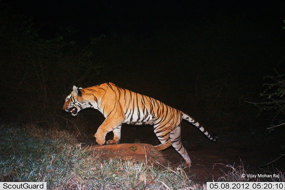 09 Manjunath camera trap for booklet cc resize_1