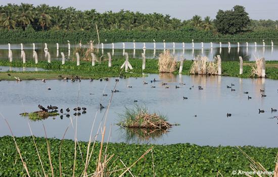 Bheemsandra-wetland
