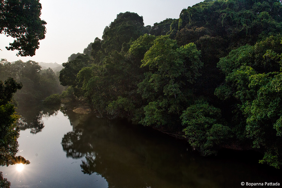 Coorg-riverine-forests