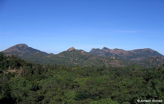 Devarayanadurga-state-forest