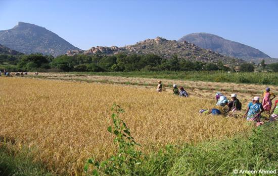 Farmlands-adjoining-Madhugiri-state-forest