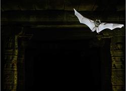 Hampi Bat Cover 300x220