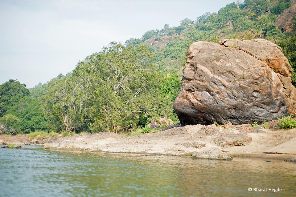 Jamun-Tree