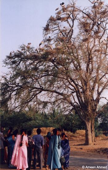 Kaggaladu-heronry
