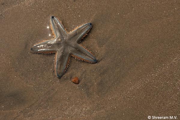 Starfish_byndoor