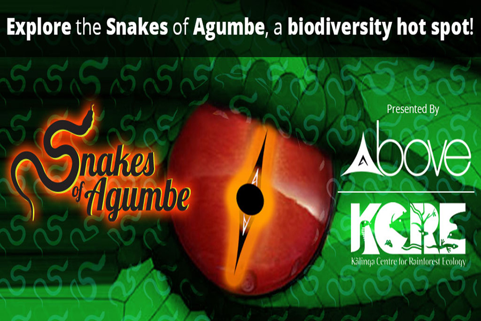 snakes of agumbe(2)