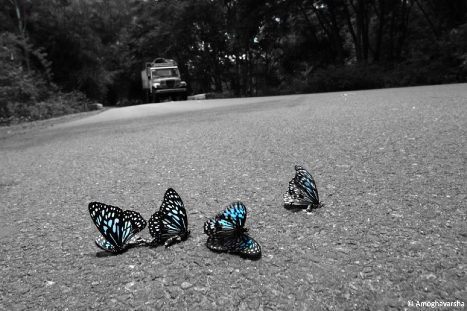 24.azbutterfly