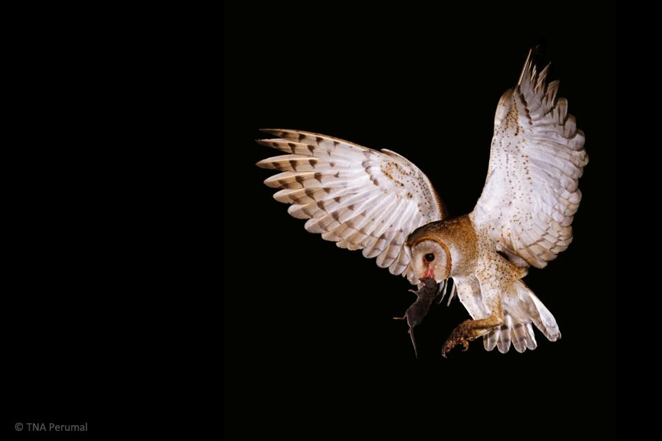 Owl-edited