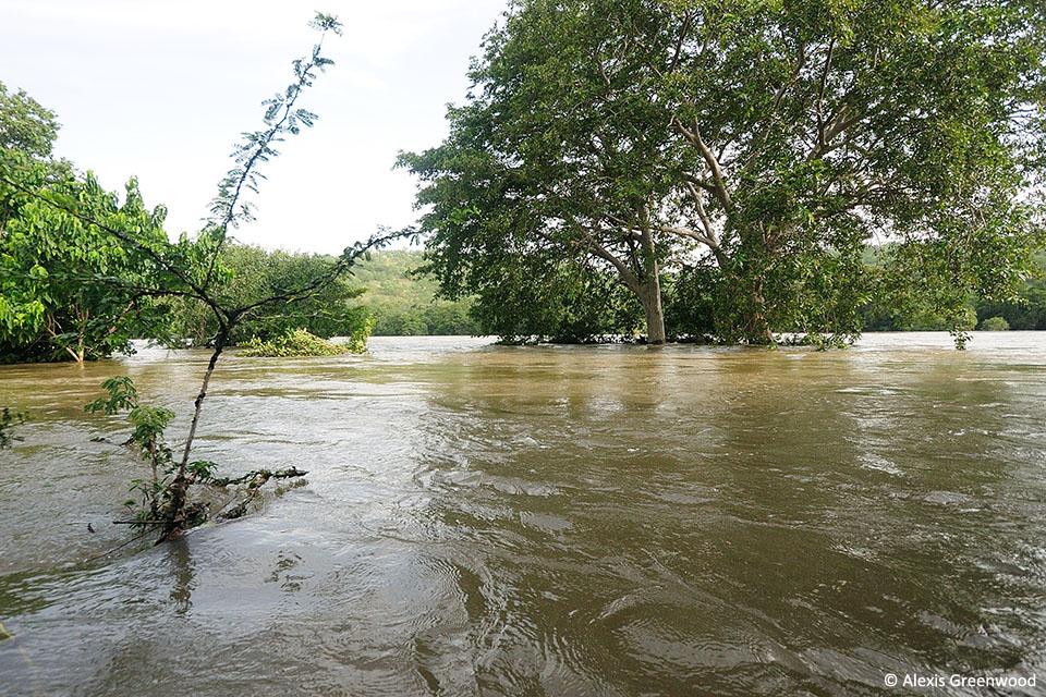 Swollen River