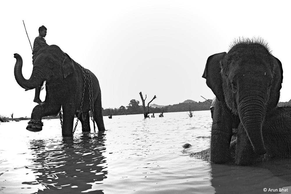 d_elephants-4(1)