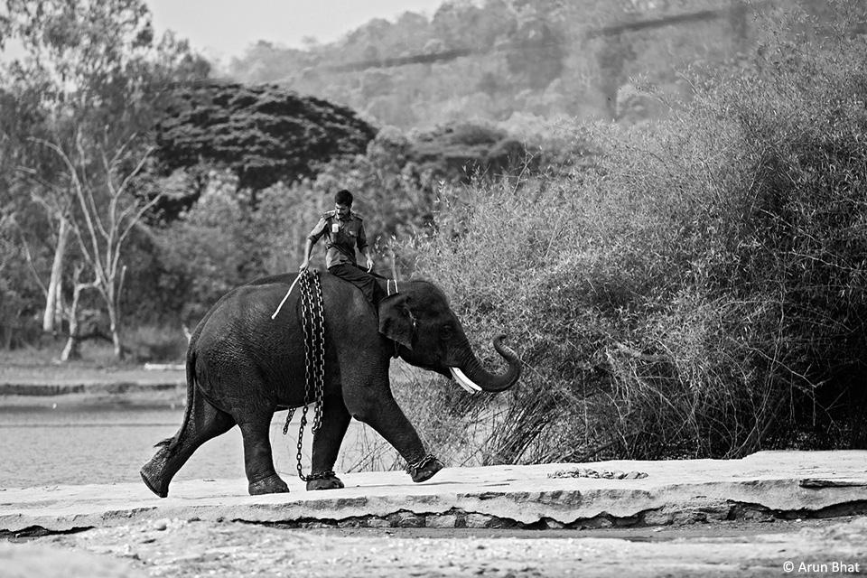 e_elephants-5(1)