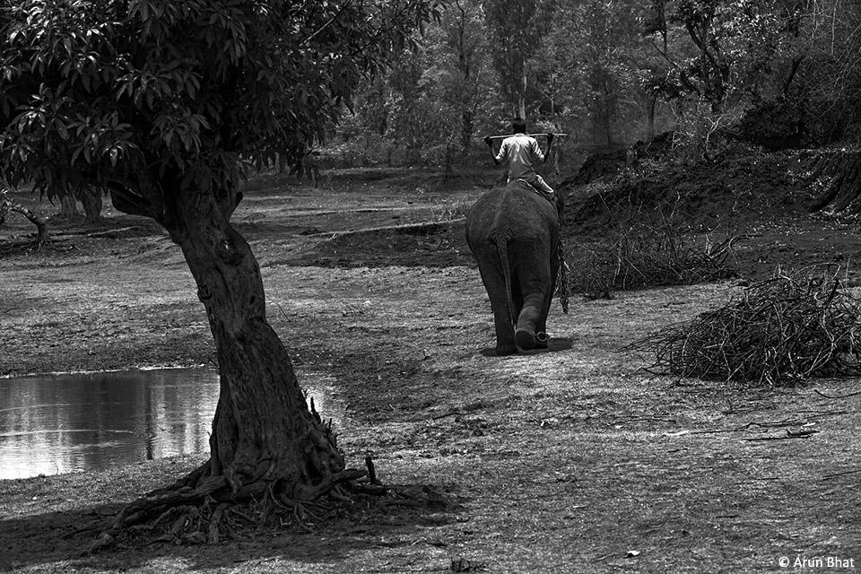 j_elephants-92(1)
