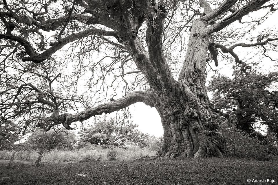 1.IMG_9098_tree_size