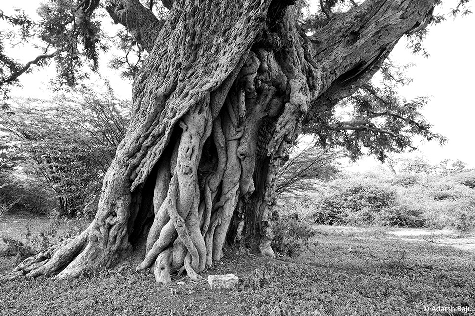 2.IMG_9210_Prop_roots_BW