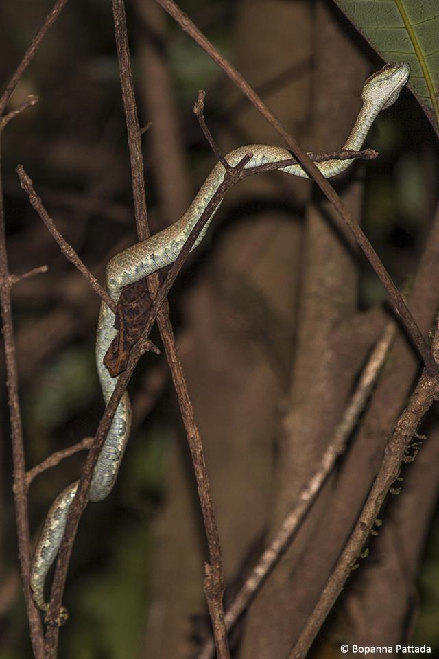 10.viper