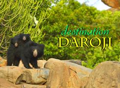 Daroji Cover