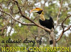 Hornbill Cover