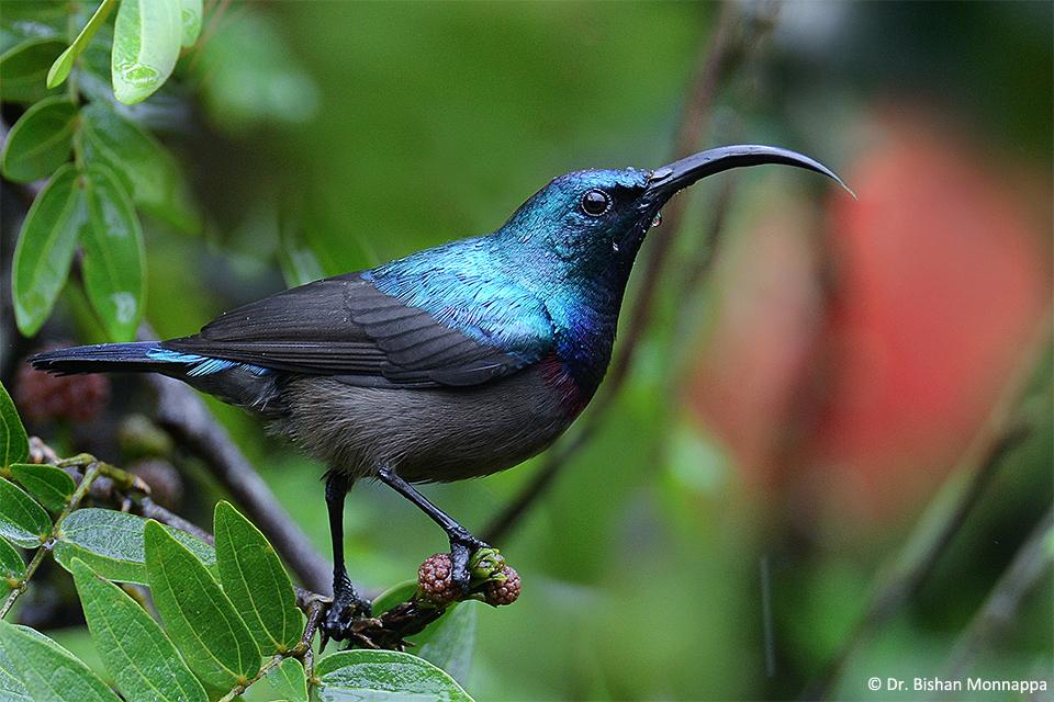 12Sunbird