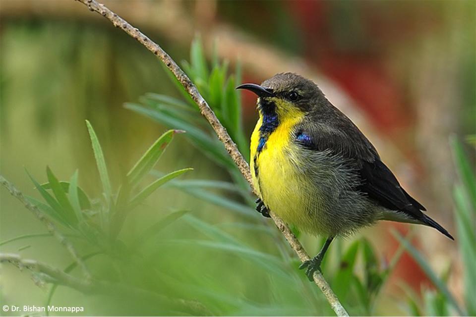 13Sunbird