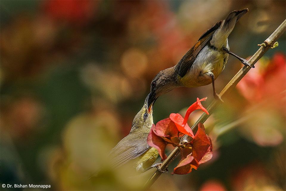 9Sunbird