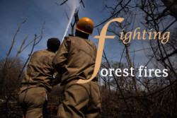 cover-forest fire