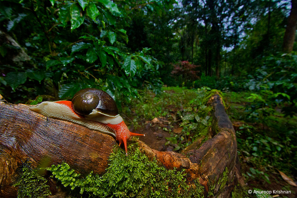 iconic-snail