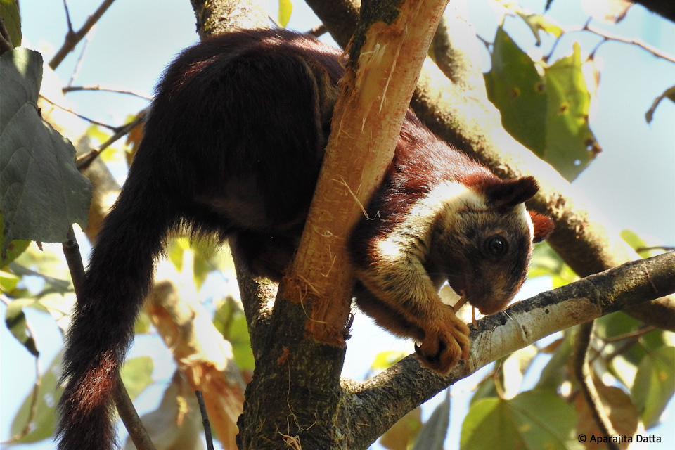 Unlikely Giants of the Tree Canopy | JLR Explore