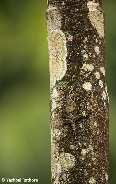 2-camouflaged