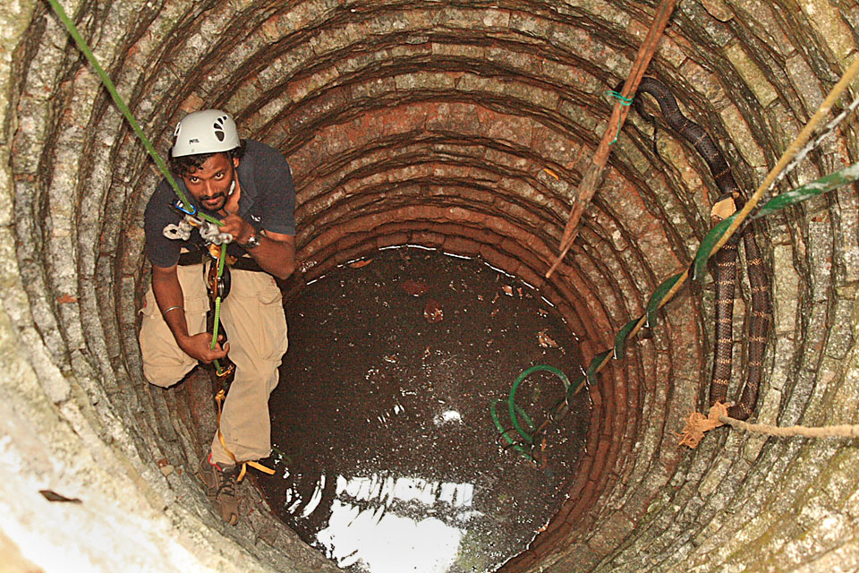 Rescuing a King Cobra from a well in Agumbe. Such efforts not only save the snake but also instil confidence amongst people that help is around